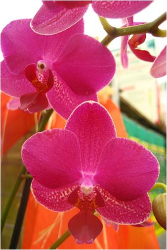 hera-charte-des-voyageurs-vos-vourses-de-ravitallement-orchides